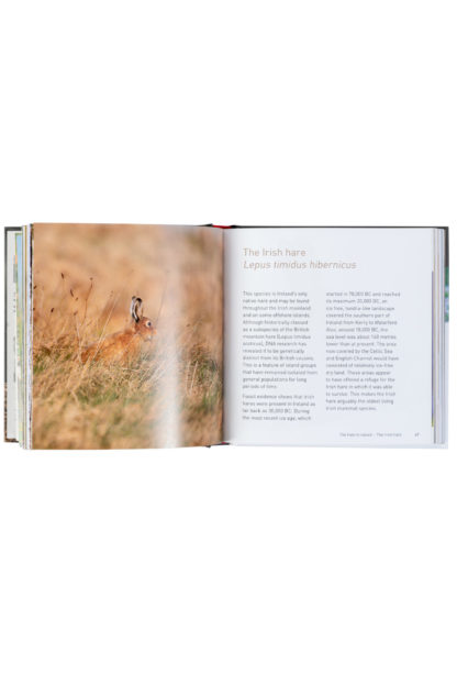 The Hare Book Inside Pages