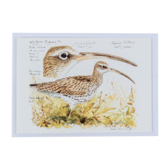 Curlew-Greeting-Card