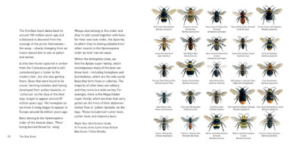The Bee Book Inside Pages 1
